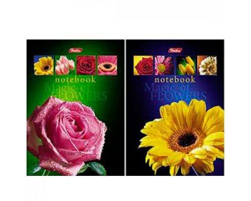 Блокнот А6 64л, 4-х цв. блок, мелован. картон, склейка, HATBER Магия цветов