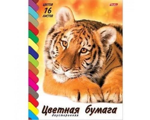 Набор цветной бумаги А4 16л, 16цв, 2-сторон., офсет, скоба, HATBER Тигренок